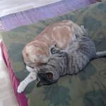 Cressida and Sesame